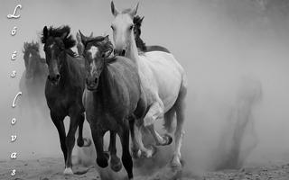 Ló és lovas
